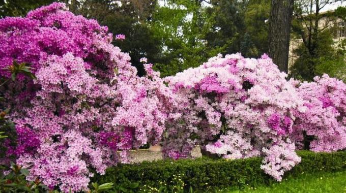 Misericordia di firenze visita al giardino dei semplici for Giardino orto botanico firenze